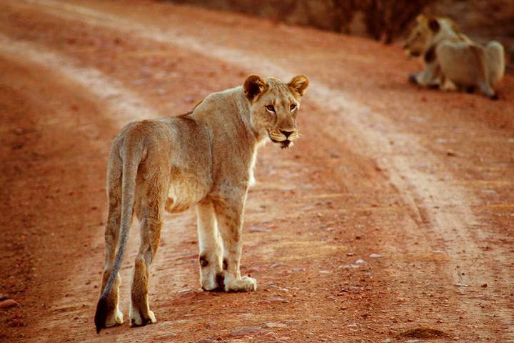 1_madikwe_suedafrika_game_drive_safari_lina_mallon_12