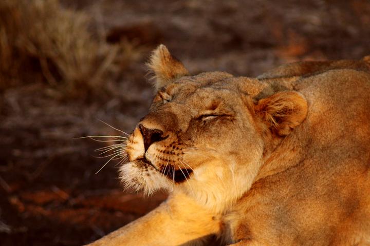 1_madikwe_suedafrika_game_drive_safari_lina_mallon_12164