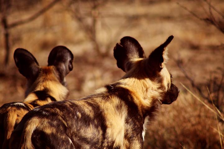 1_madikwe_suedafrika_game_drive_safari_lina_mallon_234