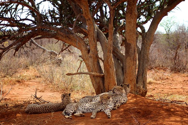1_madikwe_suedafrika_game_drive_safari_lina_mallon_2345