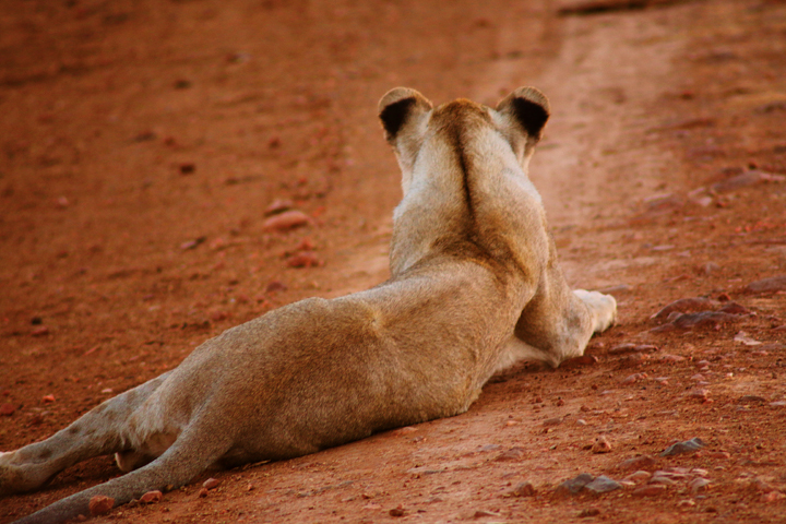1_madikwe_suedafrika_game_drive_safari_lina_mallon_34