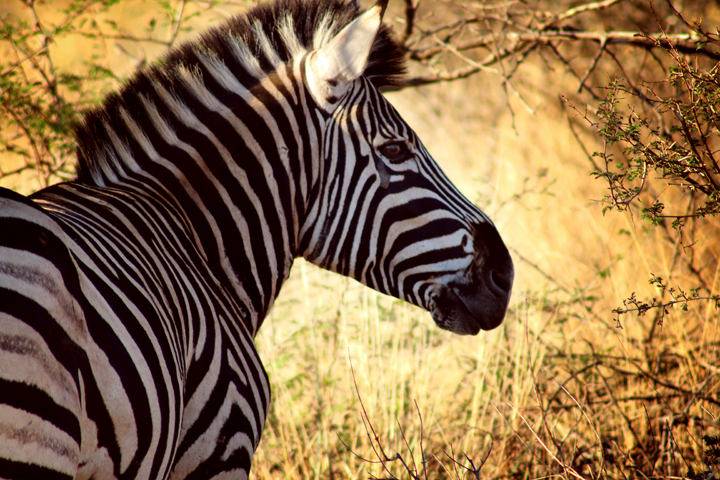 2_madikwe_suedafrika_game_drive_safari_lina_mallon_234