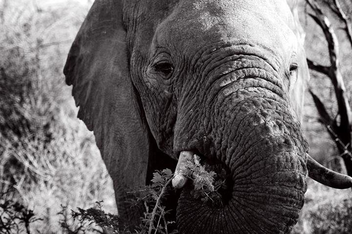 2_madikwe_suedafrika_game_drive_safari_lina_mallon_4