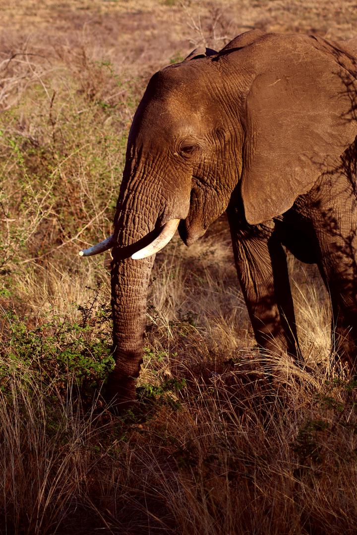 5_suedafrika_reisebericht_lina_mallon_1