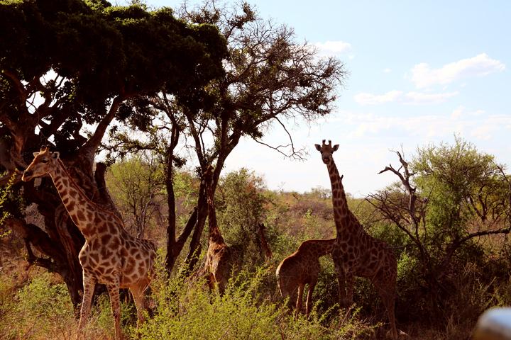7_suedafrika_reisebericht_lina_mallon_1