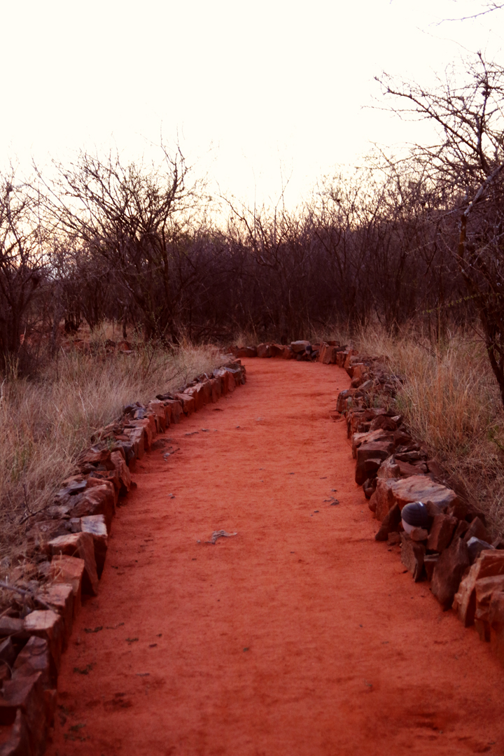 buffalo_ridge_safari_lodge_madikwe_lina_mallon_4