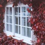 Autumn at its peek   details vsco autumnleaves