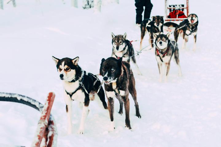 WB_Ivalo_Husky_Lappland_Tour_lina_mallon-7848