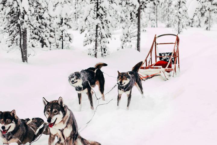 WEB_Ivalo_Husky_Lappland_Tour_lina_mallon-7664