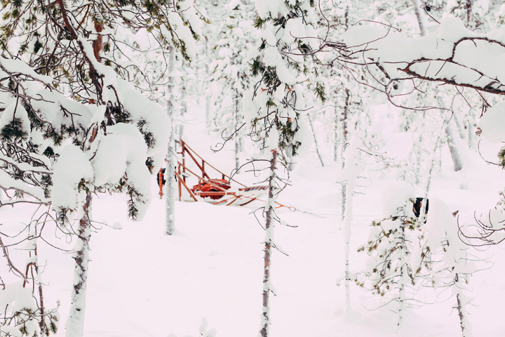 WEB_Ivalo_Husky_Lappland_Tour_lina_mallon-7681