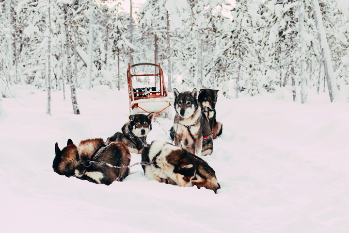 WEB_Ivalo_Husky_Lappland_Tour_lina_mallon-7700