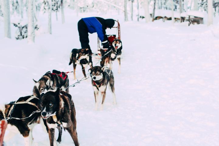 WEB_Ivalo_Husky_Lappland_Tour_lina_mallon-7847