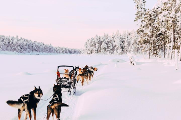 WEB_Ivalo_Husky_Lappland_Tour_lina_mallon-7851