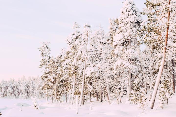 WEB_Ivalo_Husky_Lappland_Tour_lina_mallon-7852