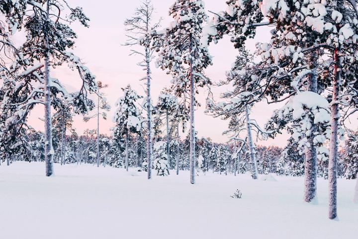 WEB_Ivalo_Husky_Lappland_Tour_lina_mallon-7867