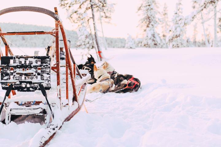 WEB_Ivalo_Husky_Lappland_Tour_lina_mallon-7884