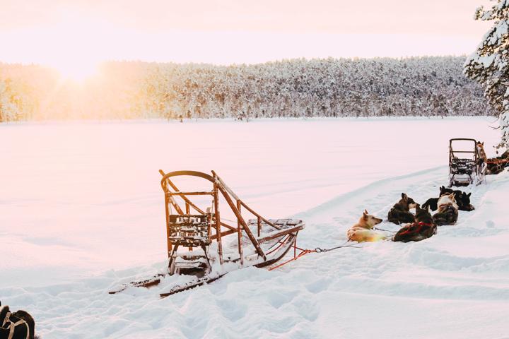 WEB_Ivalo_Husky_Lappland_Tour_lina_mallon-7893