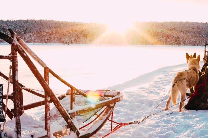 WEB_Ivalo_Husky_Lappland_Tour_lina_mallon-7907