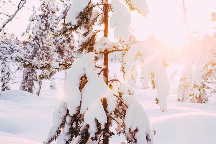 WEB_Ivalo_Husky_Lappland_Tour_lina_mallon-7995