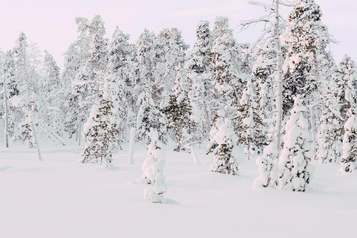 WEB_Ivalo_Husky_Lappland_Tour_lina_mallon-8019