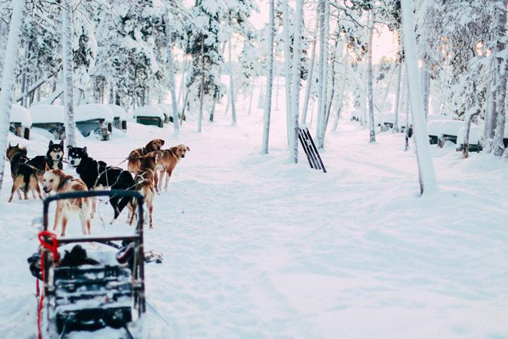 web_Ivalo_Husky_Lappland_Tour_lina_mallon-7835
