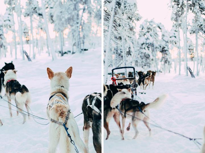 web_Ivalo_Husky_Lappland_Tour_lina_mallon-7841